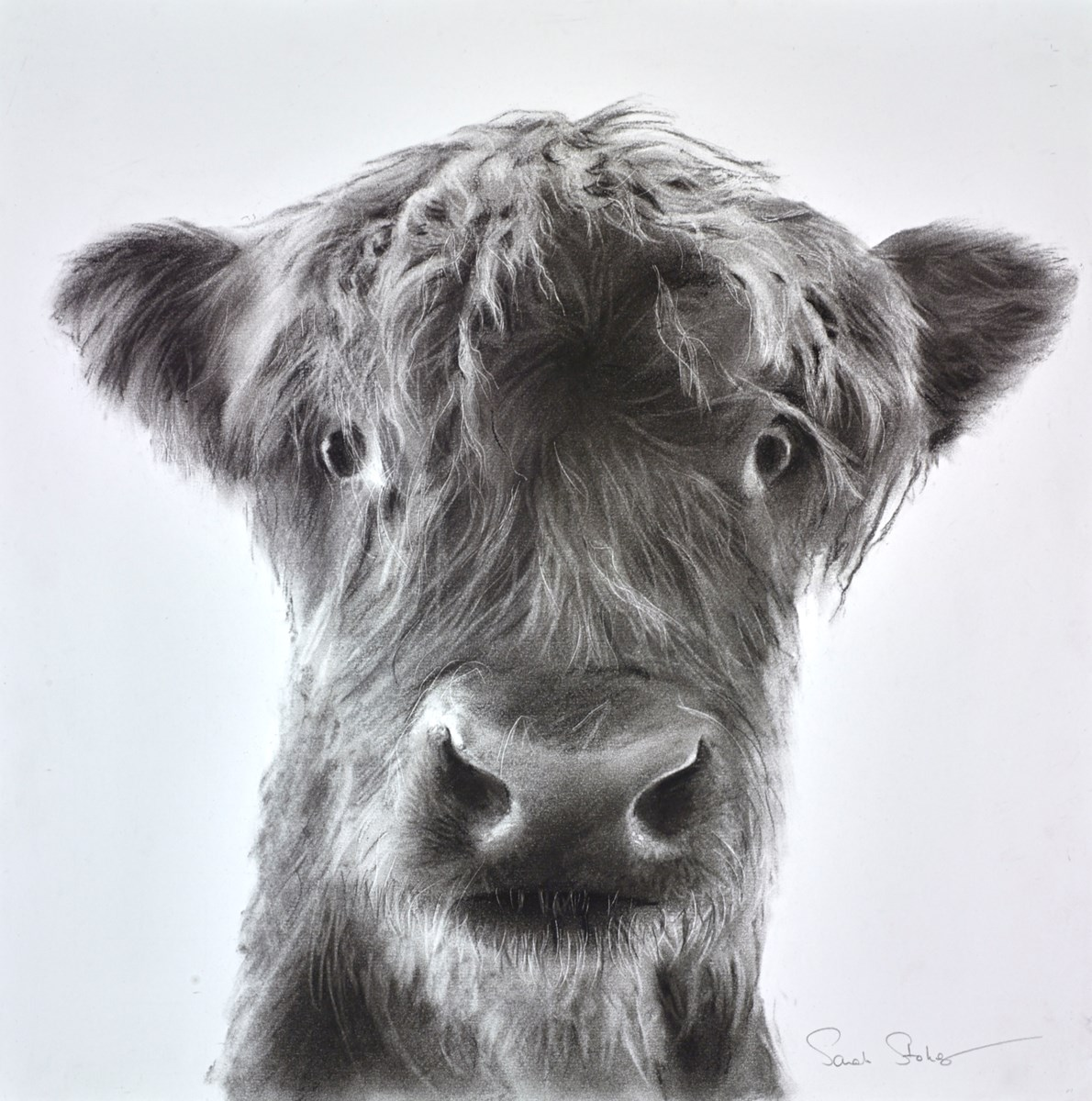 The Little Highlander by sarah stokes -  sized 17x17 inches. Available from Whitewall Galleries